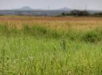 160 acres in Foard County