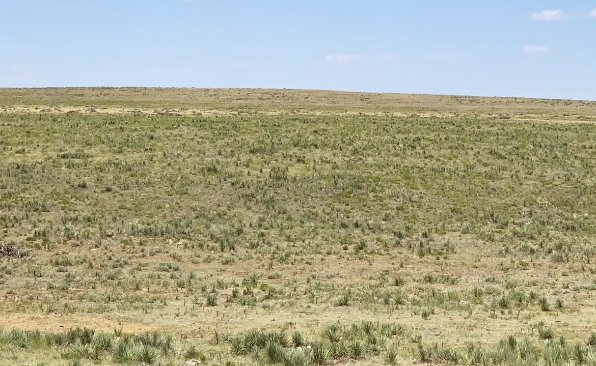 3853 acres in Randall County