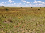 126 acres in Stonewall County
