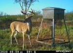 954 acres in Foard County