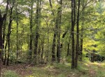 66 acres in Red River County