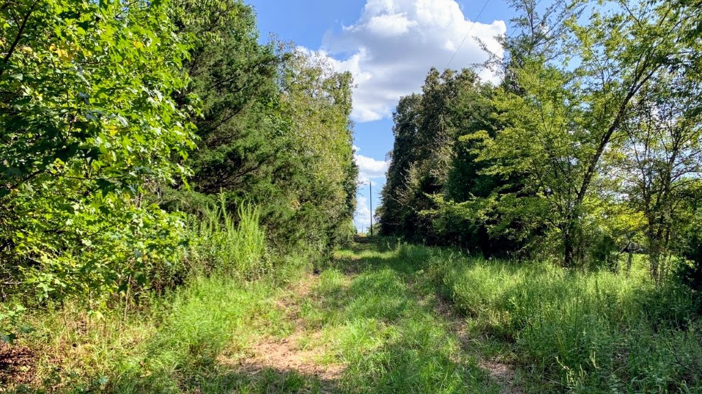 23 acres in Camp County