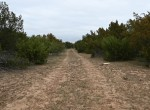 669 acres in Hardeman County