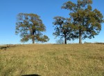 86 acres in Titus County