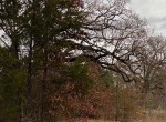2 acres in Titus County