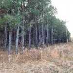 17 acres in Morris County