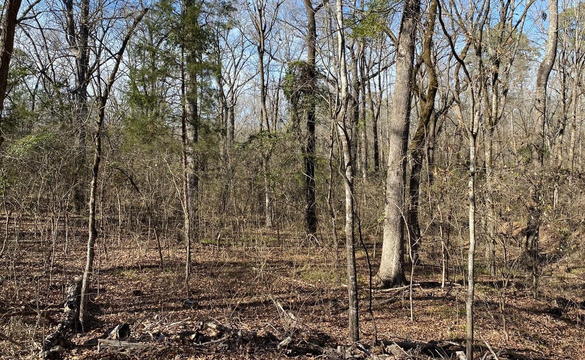 21 acres in Titus County