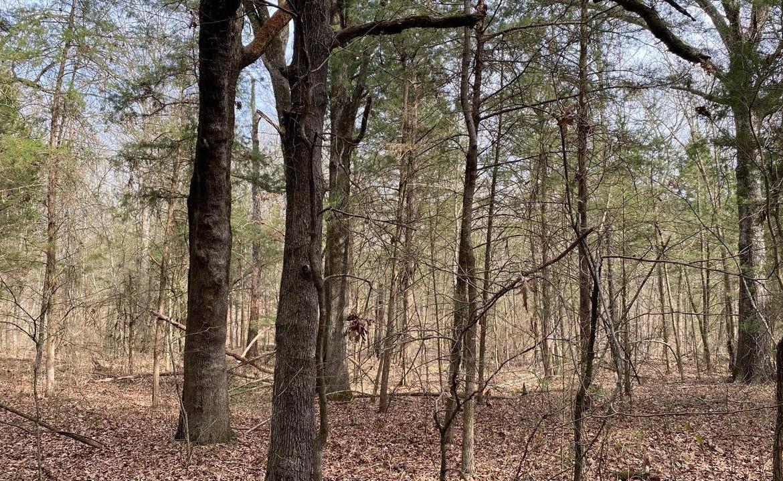 35 acres in Morris County