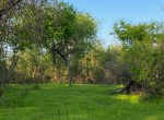 11 acres in Titus County