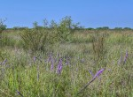 367 acres in Clay County