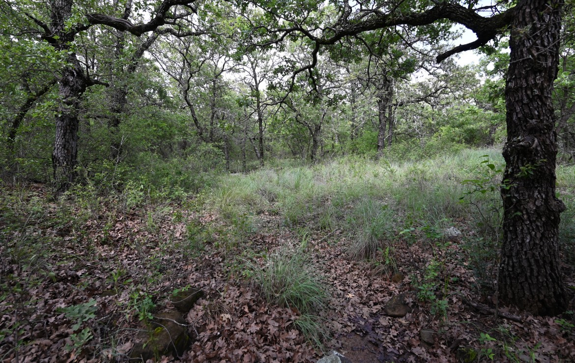 61 acres in Young County