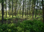 300 acres in King County