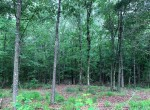 3 acres in Camp County