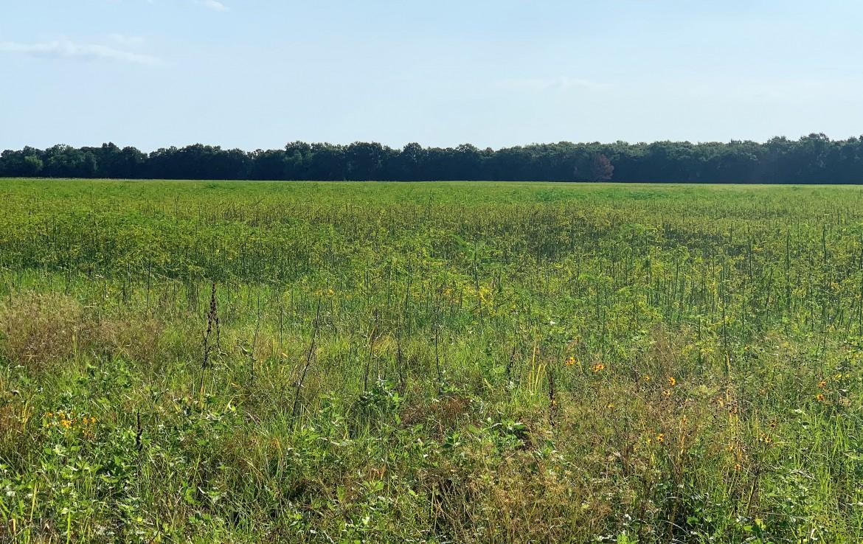 45 acres in Lamar County