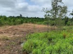 37 acres in Bowie County