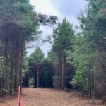 13 acres in Bowie County