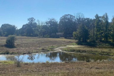 28 acres in Titus County