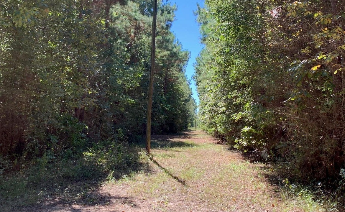 24 acres in Bowie County